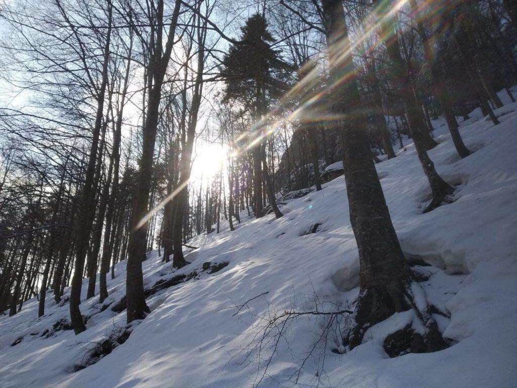 Un raggio di sole si fa strada tra gli alberi in una collina innevata.