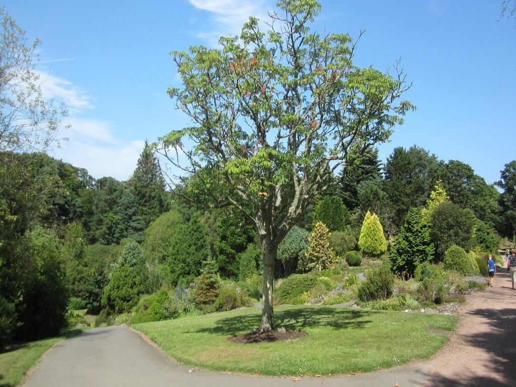 Uno scorcio dell'orto botanico di Saint Andrews con una pianta al centro